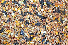 Background, texture of bird food, bird seed. Background, texture of food for the birds, bird seed Royalty Free Stock Photos