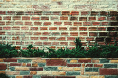 Background texture brick wall  tree in pot Royalty Free Stock Photos