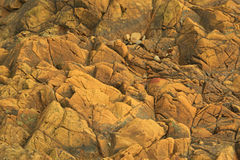Background texture of brown, reddish rock. Texture of Brown, reddish, cracked rock as Background with black water plant on a beach in France Royalty Free Stock Image