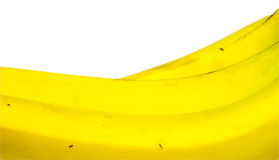 Background texture of bunch of yellow bananas Stock Photo