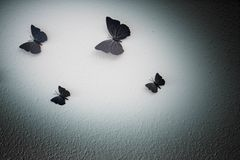 Background texture butterfly dark shadows. Background texture butterfly dark texture wall Royalty Free Stock Images
