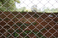 Background texture the cage Stock Images
