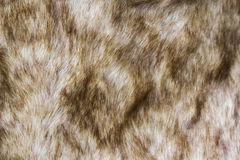Background and texture of close up of brown fur. Royalty Free Stock Image