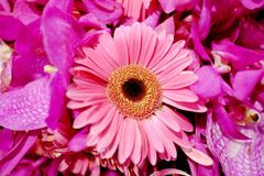 Close up sweet pink Gerbera flower blossom with a brunch of flora bouquet royalty free stock image