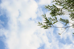 Background or texture of cloudy sky. royalty free stock photo