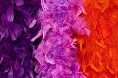 Background texture of colored boas with feathers close-up royalty free stock images