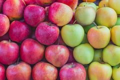 Background texture colorful apples. Background texture of multi-colored apples stacked on the market counter Royalty Free Stock Image