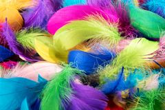 Background texture of colorful dyed bird feathers Royalty Free Stock Photos