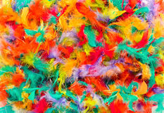 Background texture of colorful feathers. For a celebration, craft work or decoration in a full frame view in the colors of the rainbow royalty free stock photo