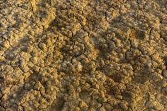 Background, texture - cracks on dry soil stock image