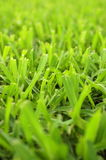 Background Texture of Cut Grass Royalty Free Stock Image