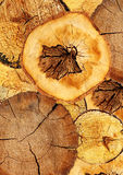 Background with texture cut of a log Stock Images