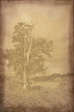 Background texture with faded landscape photograph. Vintage photograph with background texture royalty free stock images