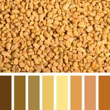 Fenugreek seed palette Royalty Free Stock Photography
