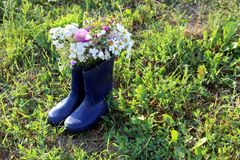 A bouquet of spring wild flowers standing in a rubber boot. Background, texture, flowers, flower, head, bud, wild, field, useful, medicinal, herb, folk medicine royalty free stock image
