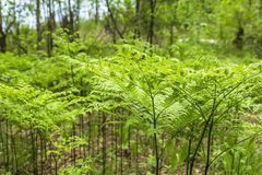 Background texture forest glade green ferns Stock Image