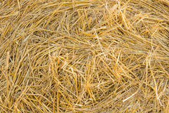 Background texture of fresh dried hay Stock Photo