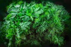 Background texture green dill and parsley. Background texture of green dill and parsley, on the market counter Royalty Free Stock Photography