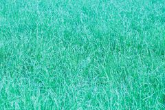 Background  texture of green grass  with color shade  turquoise  with blurred and hazy effects Royalty Free Stock Photography