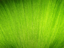 Background, texture image is close up of water hyacinth Stock Photos