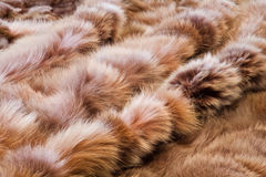 Background or texture image of fur. In perspective Stock Images