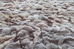 Background or texture image of fur. In perspective Royalty Free Stock Photography