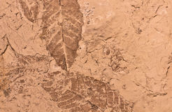 Background Texture of Leaf Fossils Royalty Free Stock Photography