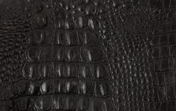 Texture crafted of black crocodile leather royalty free stock photography