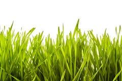Background texture of lush green spring grass Stock Photos
