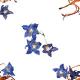 Background texture made of  Aquilegia, lily and place for text Royalty Free Stock Images