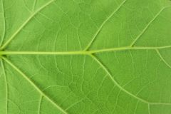 Background texture made of a close-up view of the back of a green leaf Royalty Free Stock Photos