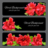 Background texture made of red fresh terry rosehips  flowers  an Royalty Free Stock Photos