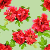 Background texture made of red rosehips  flowers  and place for Royalty Free Stock Image
