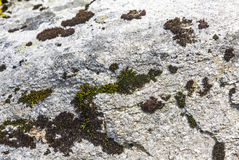 Background texture made from stone with moss Royalty Free Stock Photo