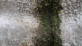 Background texture of moss are so amazing. Moss background texture royalty free stock photos