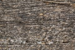 Background, texture of old planed board. stock images