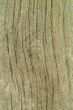 Background texture old wood Royalty Free Stock Photography