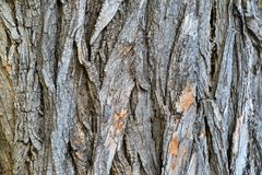 Texture of wooden bark Stock Images