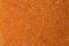 Background, texture of orange raw pike fish caviar,. Selective focus royalty free stock image