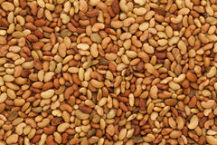 Background texture of Organic Alfalfa (Medicago sativa). Stock Image