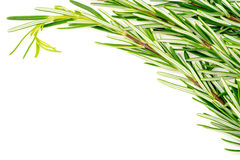 Background texture of organic rosemary bunch on white with copys Royalty Free Stock Photography