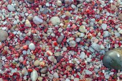 Background texture pattern color pebbles Stock Photography