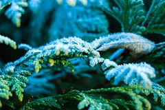 Background texture, pattern. Frost on the twigs. precipitation of small white ice crystals formed on the ground or other surfaces royalty free stock images