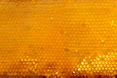 Background texture and pattern of a section of wax honeycomb from a bee hive filled with golden honey. Texture and pattern of a section of wax honeycomb from a stock image