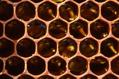 Background texture and pattern of a section of wax honeycomb from a bee hive filled with golden honey in a full frame stock images
