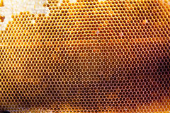 Background texture and pattern of a section of wax honeycomb stock images