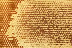 Background texture and pattern of a section of wax honeycomb fro. M a bee hive filled with golden honey in a full frame view stock images