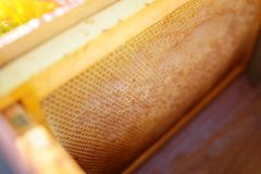 Background texture and pattern of a section of wax honeycomb fro. M a bee hive filled with golden honey in a full frame view royalty free stock photos