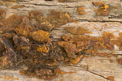 Background texture photo of petrified ancient wood changing into Royalty Free Stock Image