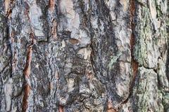 Background, texture pine bark stock image
